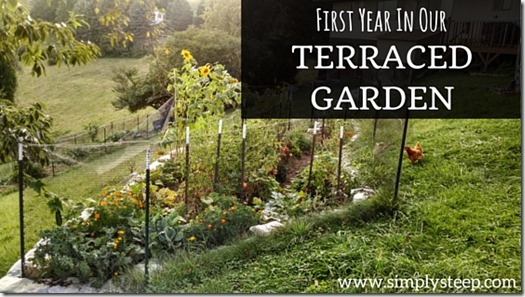 First Year In Our Terraced Garden Simply Steep Homestead